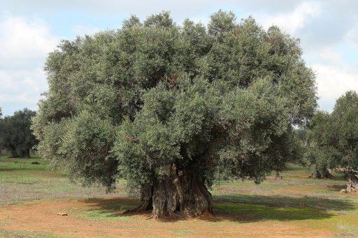 movimento-centrale-e-alberi