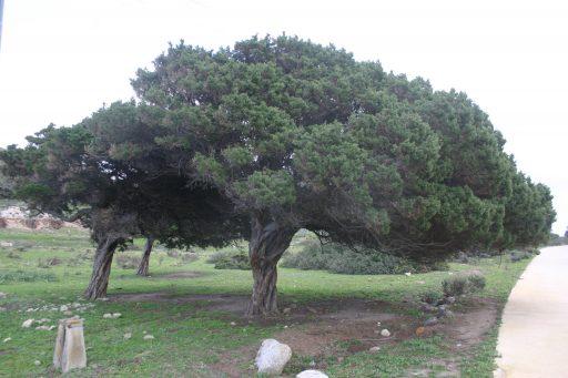movimento-rotatorio-e-alberi