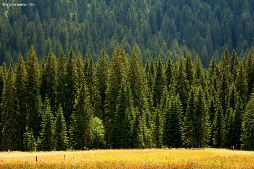 movimento-verticale-negli-alberi