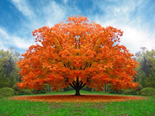alberi-e-movimento-laterale